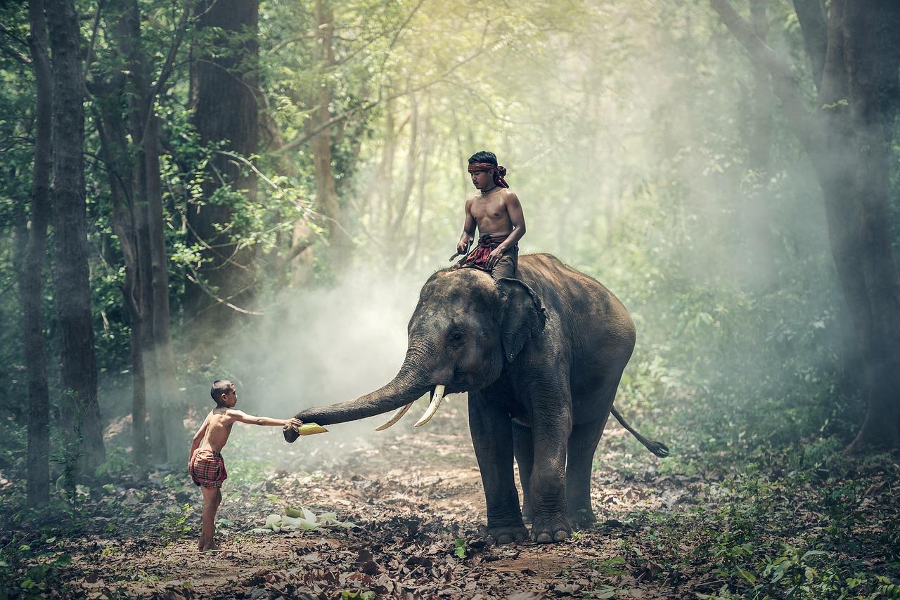 Elefánt lovaglás Thaiföld