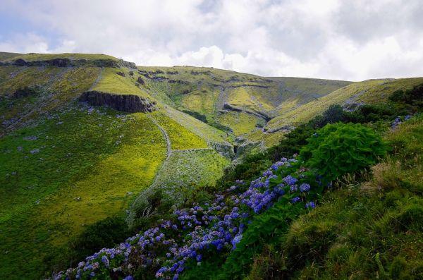Az Azori-szigetek jellegzetessége, a hortenzia