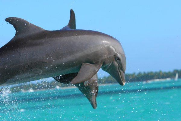 A delfinshow sokak nagy kedvence